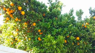 20-oranges