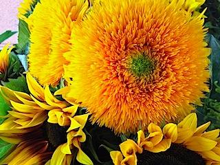sunflowers-vibrant-yellow